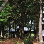 Les Nid'Île du Parcabout dans les bois du Grao de Groix